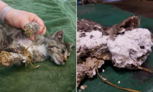 SIGN: Justice for Kitten Smothered in Spray Foam and Dumped in Trash