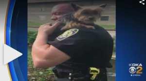 Video: Good Samaritan Calls Police to Save Puppy Stuck Hopelessly On Ledge