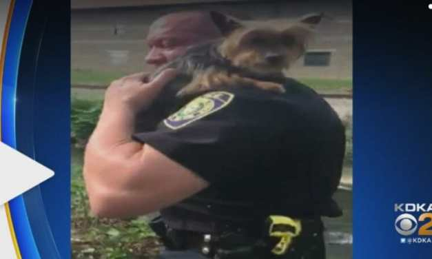 Video: Good Samaritan Calls Police to Save Puppy Stuck Hopelessly On Ledge