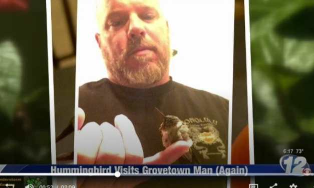 VIDEO: Hummingbird Returns Every Year to Visit Man Who Once Healed His Broken Wing