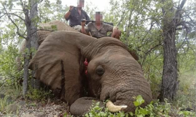 SIGN: Save Botswana's Elephants from Cruel Trophy Hunters