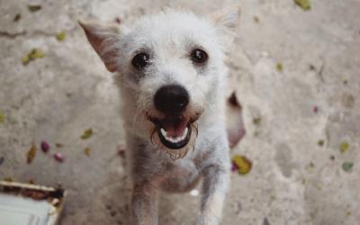 Cute, happy dog.