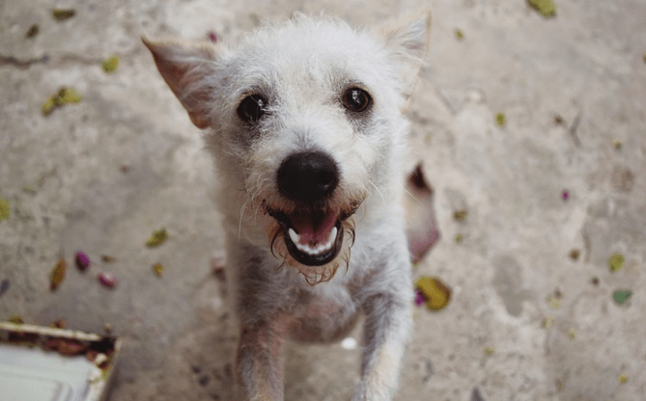 VICTORY! Arizona Toughens Laws Against Animal Cruelty