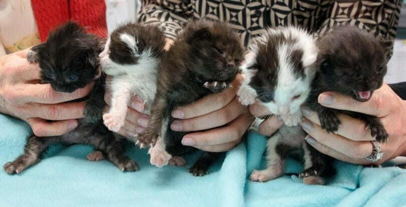 Kittens 'Hitchhike' 500 Miles Hiding in Steel Column