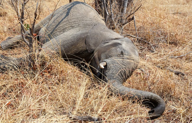 SIGN: Stop Killing Baby Elephants with Horrific 'Jaw Exploders'