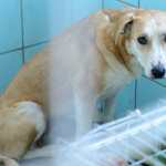 Sign: Justice for 20 Dead Dogs Found in Freezer of Cruel Breeder