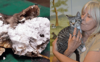 Lucky the cat saved from foam