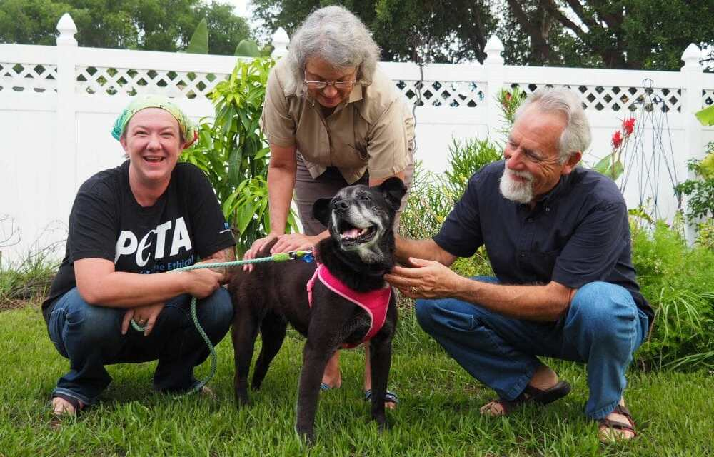 Rescued Senior Dog Spends National Mutt Day Indoors for First Time Ever