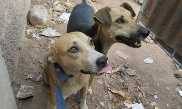 'Junkyard Dogs' Trixie and Sonny Finally Find their Forever Home