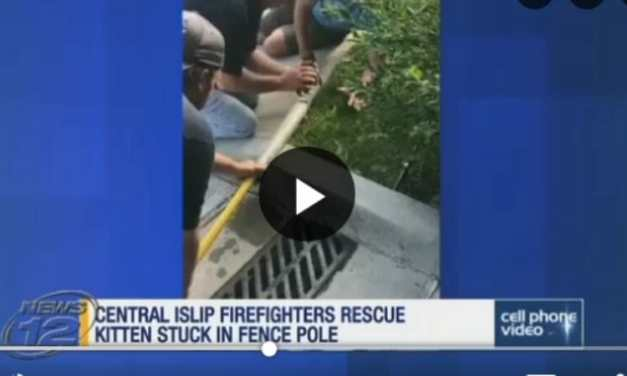 VIDEO: Hero Firefighters Rescue Kitten Stuck in Fence Pole