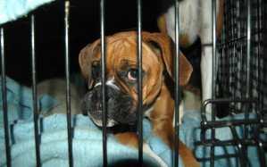 sad dog cage