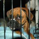 SIGN: Justice for 29 Dogs Burned to Death in Kennel Fire