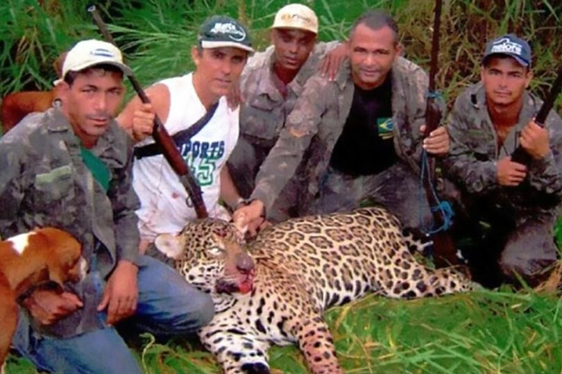 SIGN: Justice for Jaguars Brutally Killed by Cruel Poaching Gang
