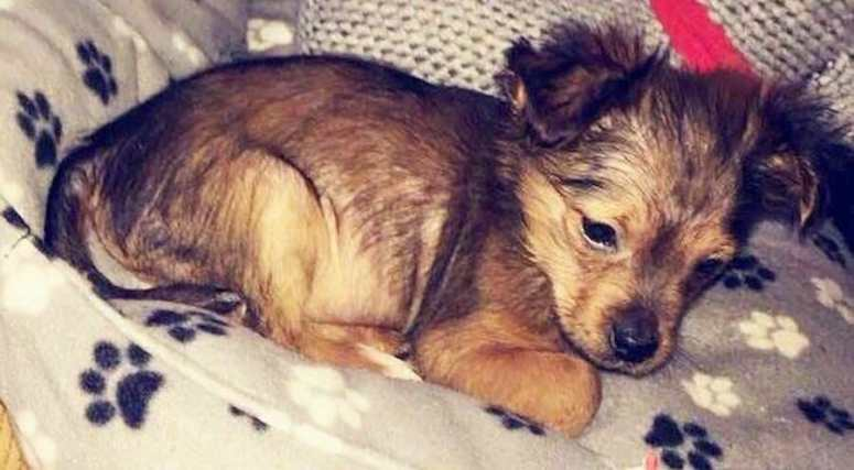PETITION UPDATE: Man Who Beat Sparky the Puppy with A Hammer Sentenced to Jail
