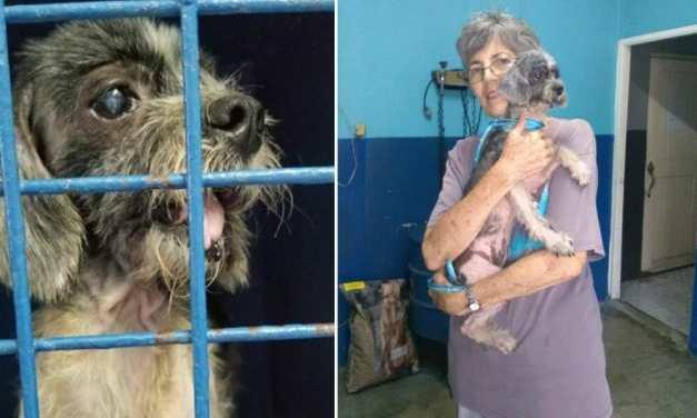 Meet Pepita, The Senior Shih-Tzu Who Got Her 'Miracle'
