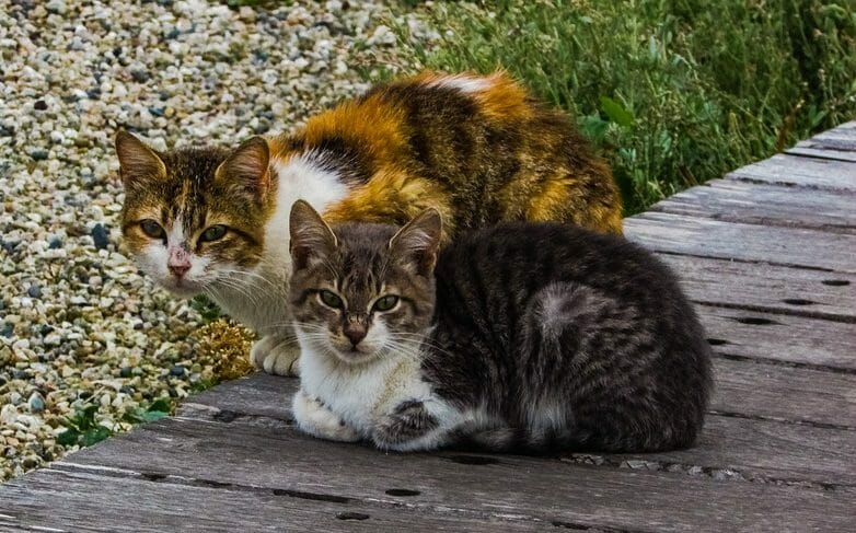 UPDATE: 79-Year Old Woman Will Not Go To Jail for Feeding Stray Cats