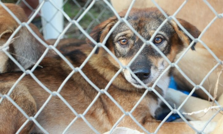 SIGN: Justice for Sick, Bleeding Dogs Abandoned in Cramped Kennel