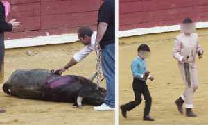 Bull tortured by children