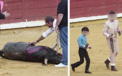 Bull tortured by children