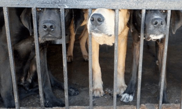 PETITION UPDATE: After 29 Dogs Burned to Death, Illinois Passes Law to Protect Animals from Kennel Fires
