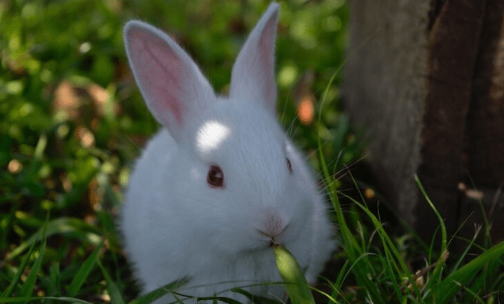 Illinois Has Just Banned Cosmetics Tested on Animals