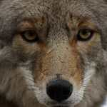 Arizona Has Just Banned Cruel and Barbaric Wildlife Killing Contests