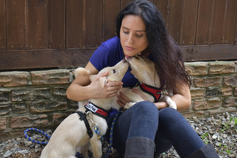 nina jackel with rescue dogs korea dog meat lady freethinker