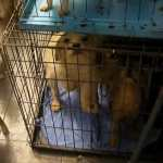 Breeder with 100 Neglected Dogs Receives Jail and Lifelong Ban on Having Animals