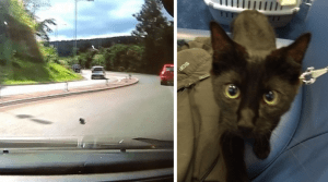 Kitten thrown on road