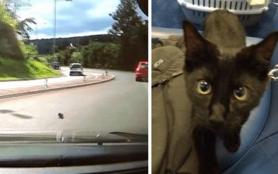 Kitten thrown on road