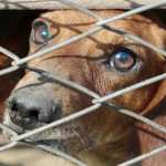 Scotland Raises Maximum Penalty for Animal Cruelty to Five Years Imprisonment