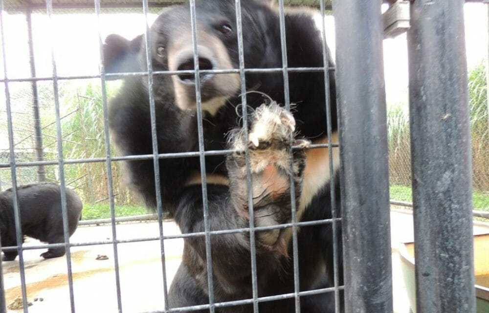 "Update: Virginia Judge Decrees Roadside Zoo ""Cruelly Treated"" Exotic Animals"