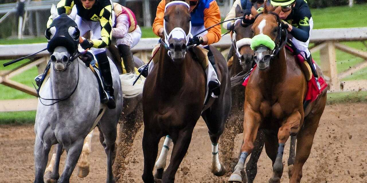 The 36th Horse Since December Has Died At Santa Anita Park Race Track