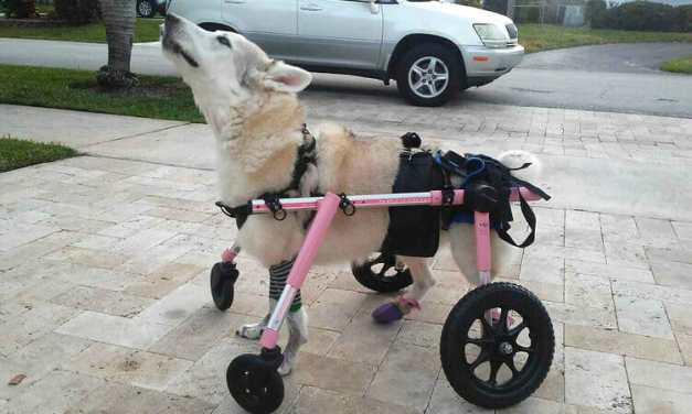 SIGN: Justice for Zorra, Disabled Dog Who Died After Being Kidnapped by Car Thief