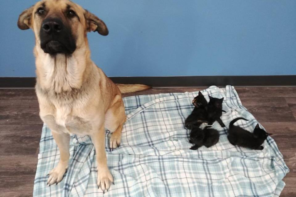 VIDEO: Stray Dog Keeps Orphaned Kittens Warm on Cold, Snowy Night