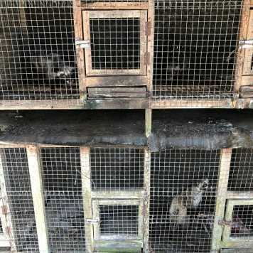 Stacked civet cages on farm
