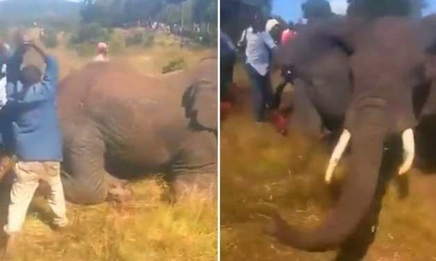 SIGN: Justice for Elephant Hacked to Death by Mob