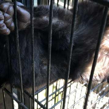 Civet paw in cage door