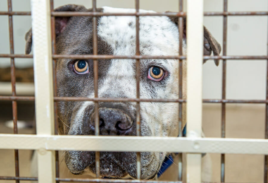 SIGN: Justice for 29 Caged Dogs Forced to Fight for Their Lives
