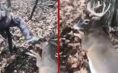 teenagers kicking deer Pennsylvania