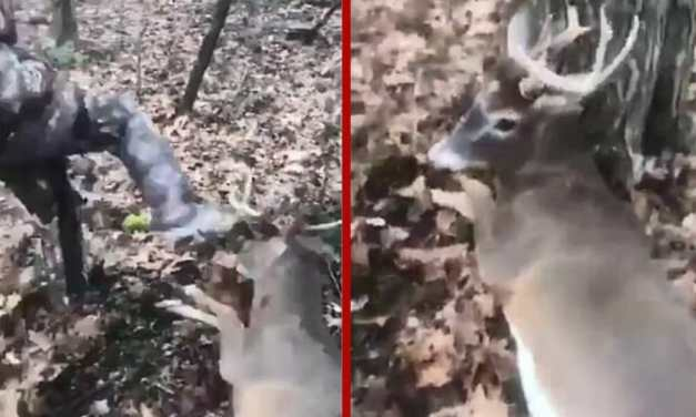 SIGN: Justice for Deer Beaten, Antlers Ripped Off by Laughing Teens in Snapchat Video
