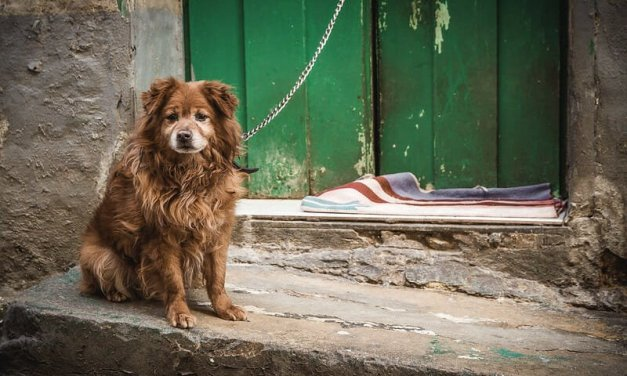 5 Reasons Everyone Should Care About Animal Abuse