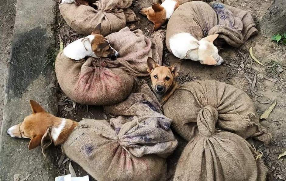 SIGN: End India's Cruel Dog Meat Trade