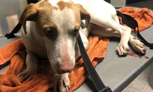 SIGN: Justice for Puppy Hurled from Overpass And Left for Dead