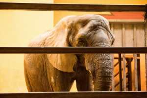 New List Names the 10 Worst Zoos for Elephants