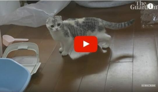 Video: Brave Volunteer Rescues Cats in Wuhan Abandoned in Coronavirus Scare