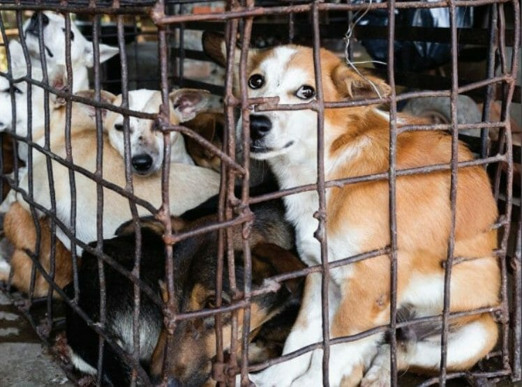 Dog and Cat Meat Trade Linked to Increased Risk of Rabies and Coronavirus, New Report Shows