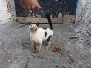 UK Photographer Anne Heslop Works to Save Morocco's Street Cats