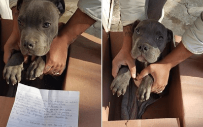 Boy Leaves Puppy At Shelter to Save Him From Father's Abuse