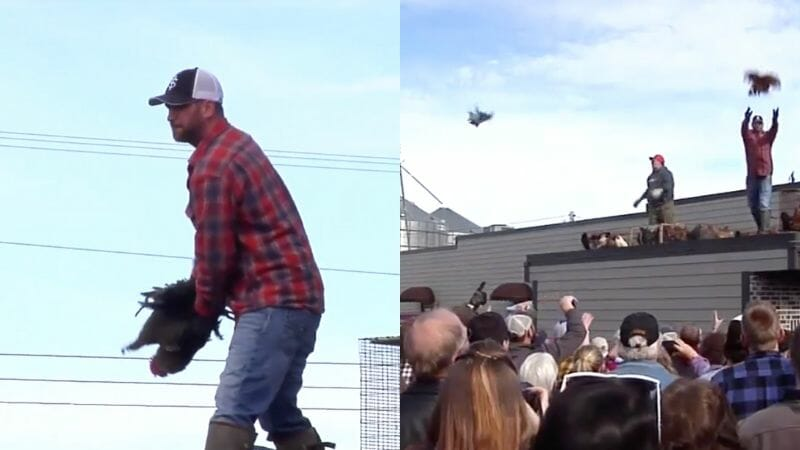 SIGN: Justice for Chickens Tossed Off Roof at Cruel Festival
